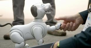 Ученые рассказали о пользе роботизированных питомцев для пенсионеров