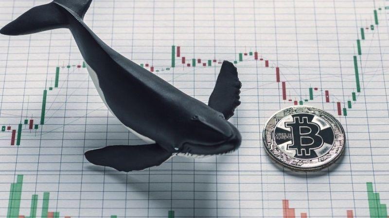 Исследование: «интерес институциональных инвесторов к биткоину продолжает расти»